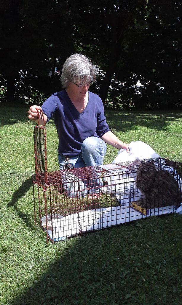 trap feral cat